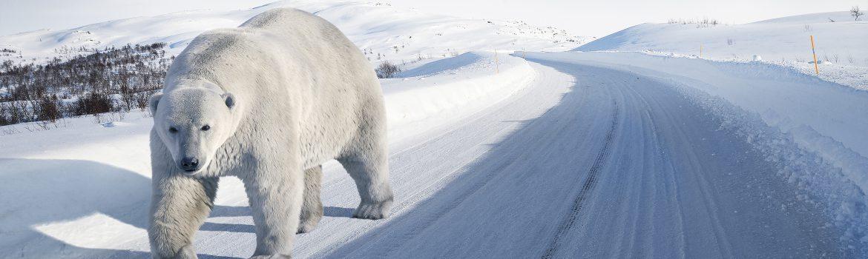 Polar caravan